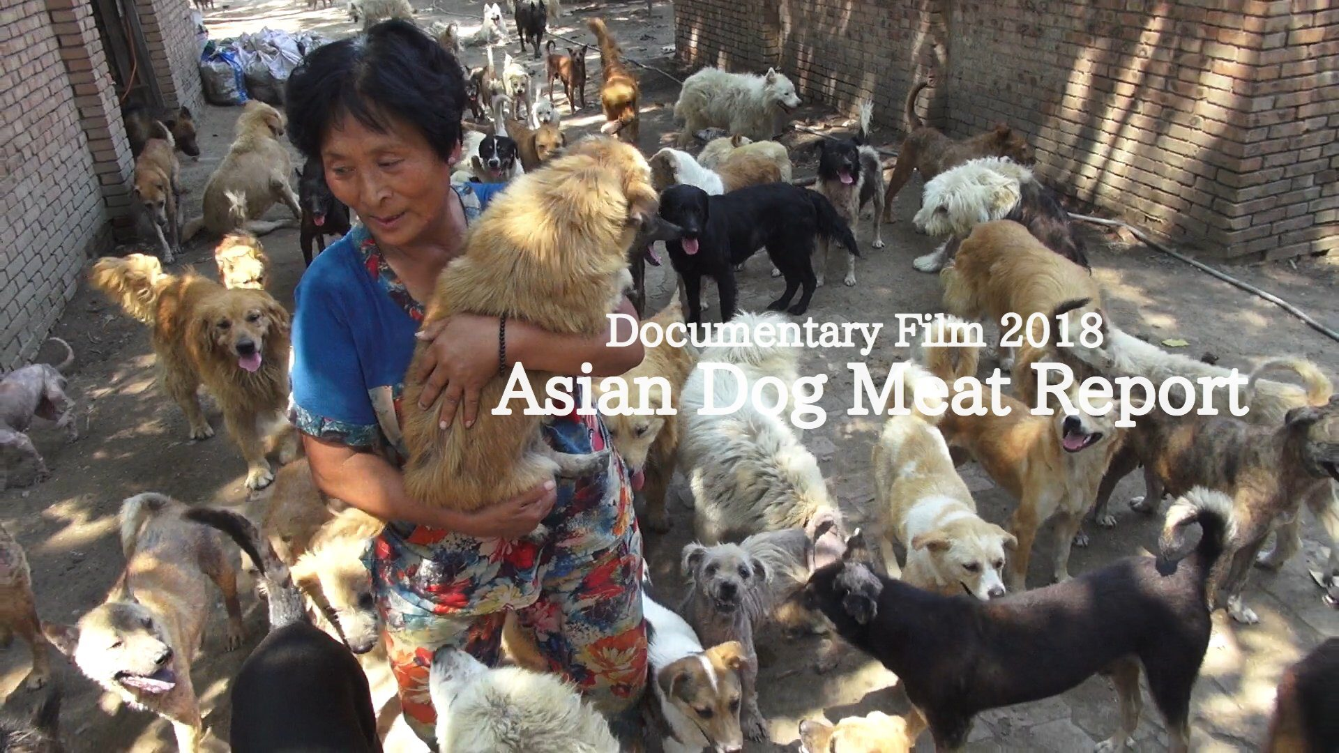 Asian Dog Meat Report|Official site